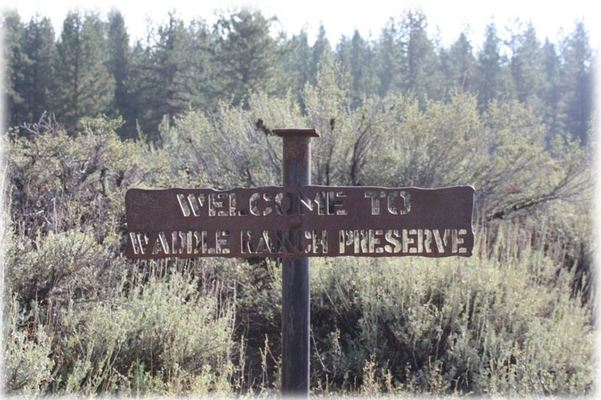 Slider waddle ranch 2  2