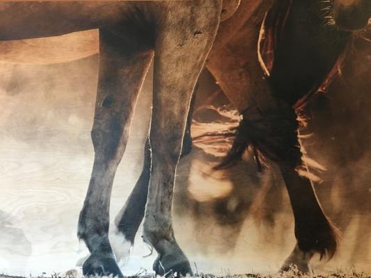 Slider art fall 2016 horse legs